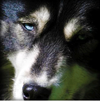 Top 5 Serien: BlackHusky